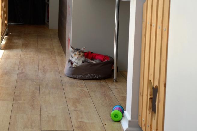 2016-05-03 b bar à chat 005
