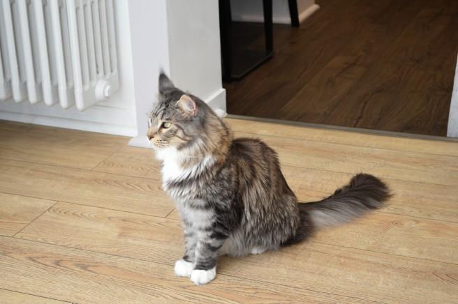 2016-05-03 b bar à chat 007