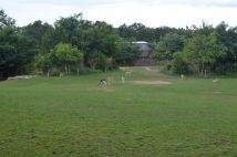l'enclos des gazelles